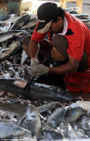 Ước tính 73 triệu con cá mập bị giết mỗi năm chỉ để làm thực phẩm cho món súp vi cá nổi tiếng.