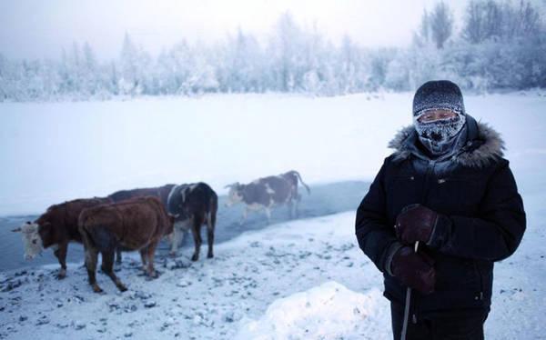 Nhiệt độ trung bình tháng 1 tại Oymyakon là -50 độ C