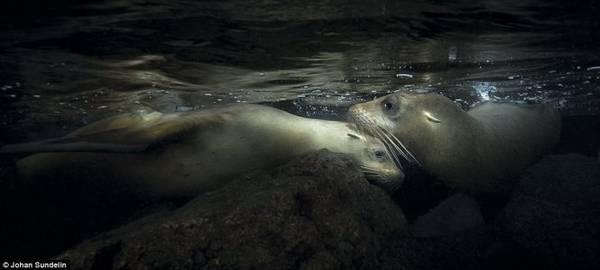 Bức ảnh chụp hai chú sư tử biển