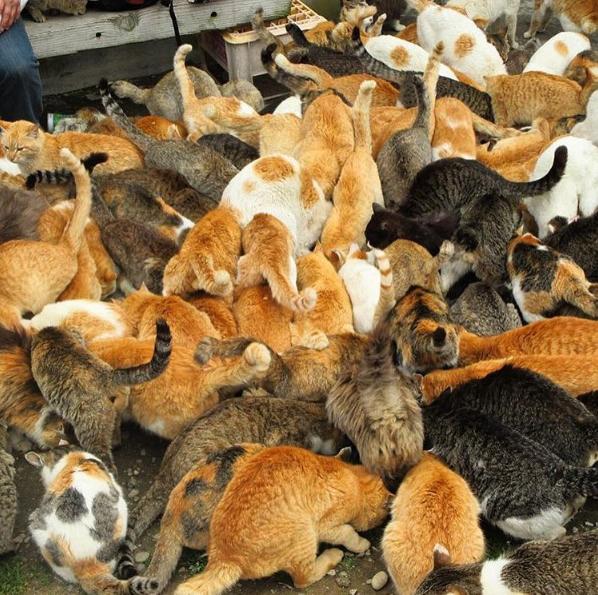 """Cả """"tập đoàn"""" mèo cư ngụ trên đảo. Ảnh: @nishimozuku"""