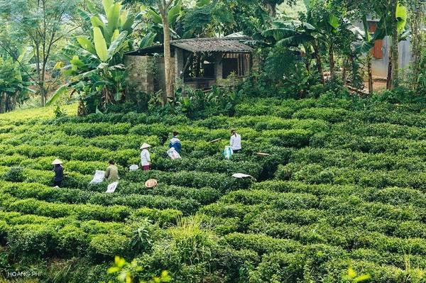 Không chỉ được biết đến với đặc sản là loại chè đặc biệt thơm ngon, vùng đất Thái Nguyên còn nổi danh với hồ núi Cốc thơ mộng và những đồi chè Tân Cương xanh bạt ngàn.