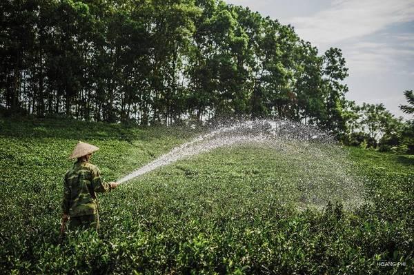 Đồi chè Tân Cương thuộc xã Tân Cương, cách trung tâm thành phố Thái Nguyên khoảng 10 km về phía tây nam. Đồi chè này nằm trong vựa chè rộng 1.300 ha. Khi mặt trời ló rạng, cả vùng đất xanh mát bừng lên sức sống.