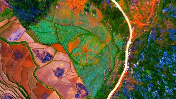 Ngoài cao nguyên đá, Hà Giang còn nổi tiếng với những cánh đồng hoa tam giác mạch. Nhìn từ trên cao, những cánh đồng xanh nổi bật trên nền đất đỏ của vùng núi Hà Giang tạo thành những mảng màu rất đẹp mắt.
