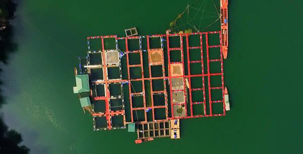 Những lồng cá trên sông Đà tuy đơn giản nhưng lại bắt mắt khi nhìn từ trên cao. Sắc xanh lục của dòng nước cùng bè lồng tạo nên mảng màu mới. Đây là mô hình nuôi cá kiểu mới với 50 lồng các loại. Mỗi năm, mô hình này cung ứng cho thị trường 100-130 tấn cá thành phẩm.