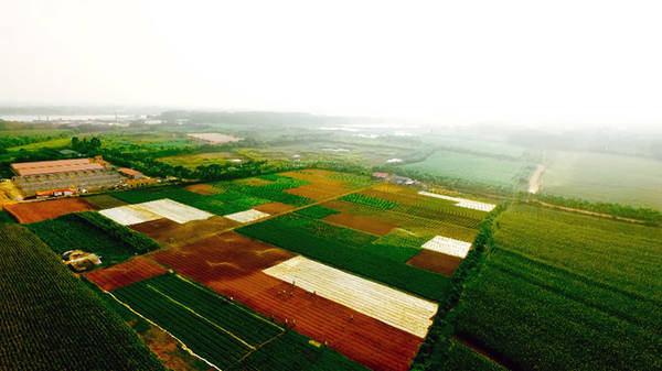 Màu nâu của đất, màu xanh của cây lá, màu vàng lúa… đã góp phần tạo nên bức họa đồng quê giản dị mà rực rỡ sắc màu.