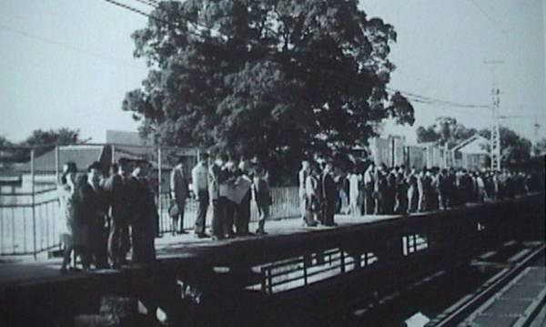 Khi ga Kayashima đi vào hoạt động vào năm 1910, cây long não đã ở đó che nắng mưa cho hành khách. 60 năm sau, chính phủ quyết định mở rộng nhà ga để phục vụ nhu cầu đi lại ngày càng tăng của người dân. Năm 1972, kế hoạch xây dựng được thông qua kèm theo điều khoản cây long não sẽ bị đốn hạ. Ảnh: me de miru neyagawashi no hyakunen.