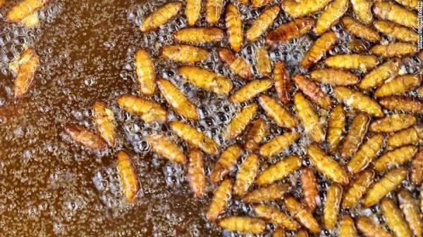 Ngoài tự nấu và thưởng thức món nhện độc rán giòn, du khách đến với lớp học nấu ăn của Ouch còn có thể học nấu nhộng tằm và châu chấu.