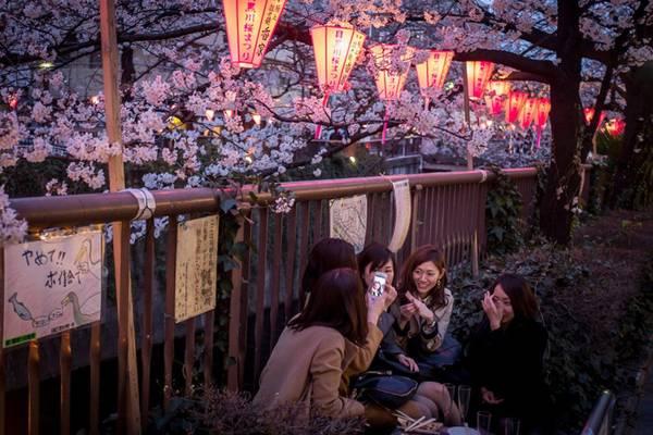 """Hoa anh đào là một """"đặc sản"""" của du lịch Nhật Bản. Ảnh: ibtimes.co.uk"""