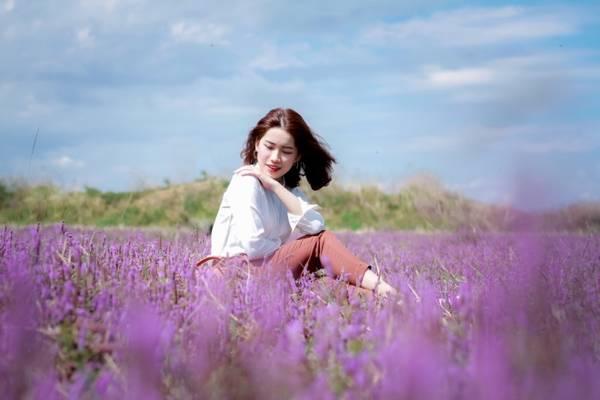 Loài hoa màu tím trên cánh đồng.