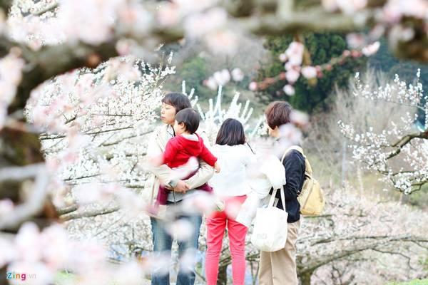 Một số điểm ngắm hoa mận nổi tiếng ở Nhật Bản là Fukuoka (Kyushu), Kairakuen (Ibaraki), Inabeshi nougyo koen, Akatsuka no mori teien ( Mie), Jonangu (Kyoto).