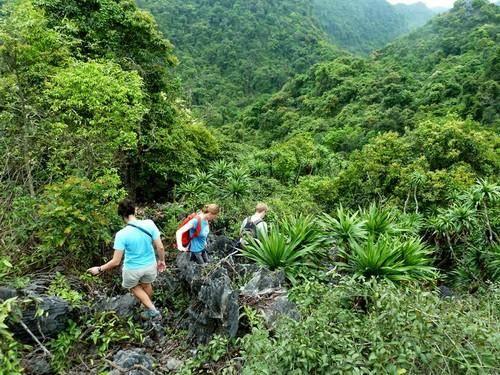 Trekking xuyên rừng ở Cát Bà. Ảnh: Vamvo.