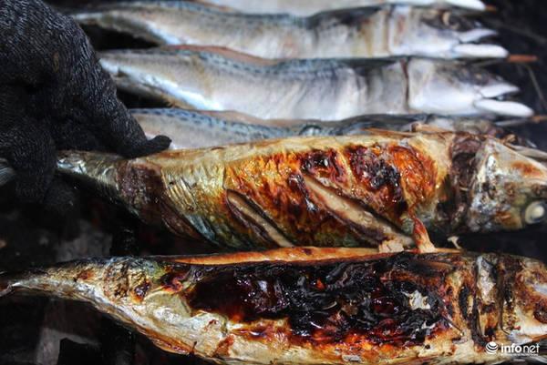 Những con cá biển béo ngậy, tươi ngon được bắc lên bếp than củi nướng.