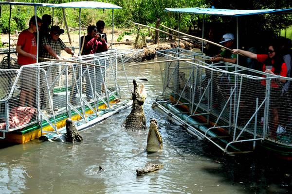 Trải nghiệm cảm giác mạo hiểm với trò câu cá sấu.