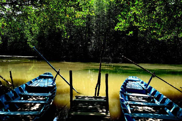 Nơi đây đã được UNESCO công nhận là khu dự trữ sinh quyển thế giới vào năm 2000, có hệ động vật rừng ngập mặn rất phong phú,. Tại đây, du khách có thể di chuyển bằng ca nô hoặc bằng xe để vào tận nơi, sau đó bắt đầu chuyến du ngoạn và tha hồ chụp ảnh trên Đầm Dơi bằng thuyền.