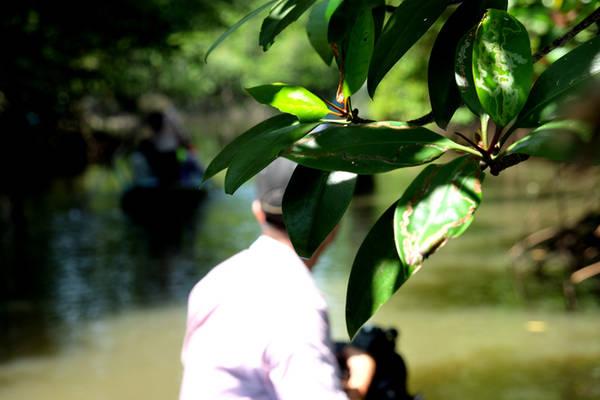 Nhiều đoạn, du khách có cảm giác hòa mình với thiên nhiên khi thuyền trôi dưới những nhánh đước, chà là, ráng, mắm. Đây cũng là những loại cây sống nhiều nhất ở vùng nước mặn Cần Giờ.