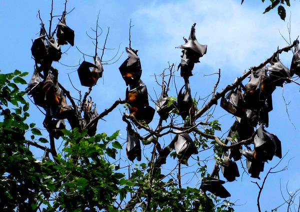 Dơi về đây theo mùa và Đầm Dơi cũng là nơi bảo tồn loài dơi to. Vào mùa dơi về, khi đến Vàm Sát, du khách có thể thấy cả đàn dơi vài chục, thậm chí hàng trăm con đu kín những ngọn cây.