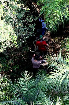 Rời Đầm Dơi, khách có thể đến với khu trung tâm Vàm Sát để thăm vườn chim, tận hưởng cảm giác đi dưới mảng rừng nước mặn ồn ào chao chát tiếng cò tiếng vạc và nhiều loại chim khác.