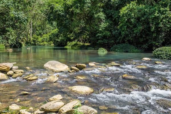 Dòng nước suối chảy hiền hòa, sạch trong khiến ta có thể nhìn rõ đáy với từng đàn cá nhởn nhơ bội lội.