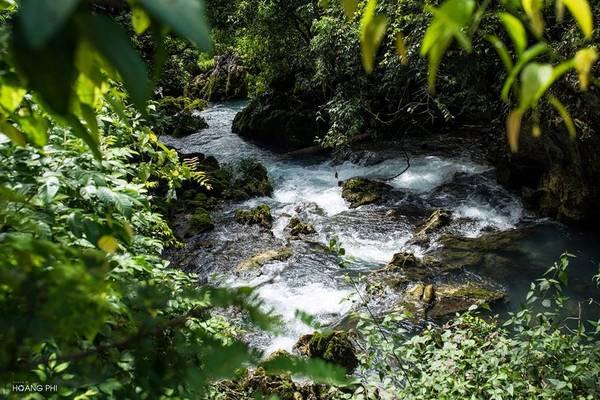 Hàng cây cổ thụ hai bên dòng cũng vươn mình soi bóng xuống mặt nước, tạo nên khung cảnh yên ả, thanh bình.