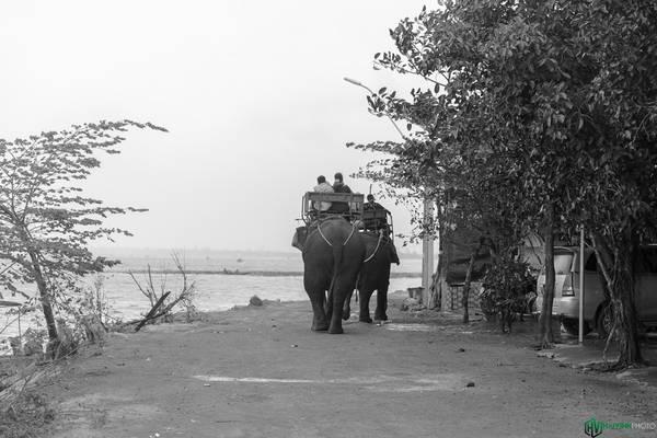 Tại đây có nhiều dịch vụ để đáp ứng nhu cầu của du khách như homestay, thưởng thức ẩm thực bản địa, giao lưu cồng chiêng, cưỡi voi, chèo thuyền độc mộc trên hồ.