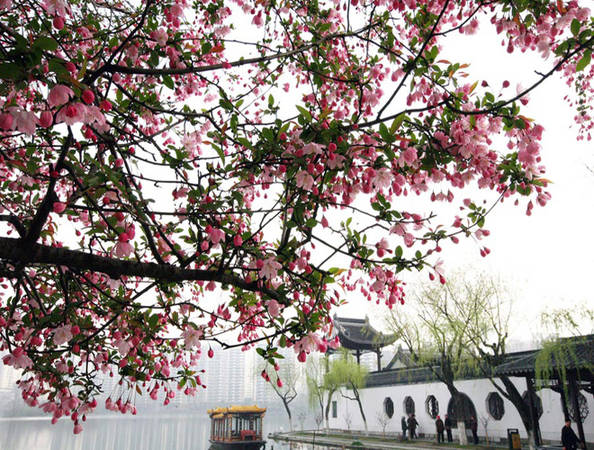 Nam Kinh là một thành phố văn hóa lịch sử ở Trung Quốc. Mùa xuân, công viên Mochouhu ở Nam Kinh, tỉnh Giang Tô được phủ kín bởi sắc hoa đào hồng thắm.