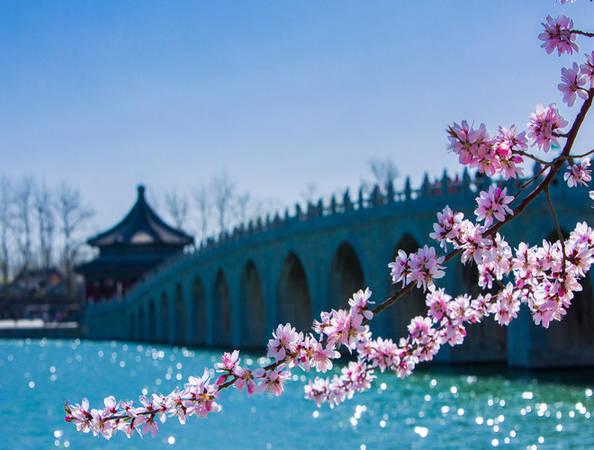 Bắc Kinh luôn tự hào vì có nhiều công viên và địa điểm tham quan cấp quốc gia. Vào mùa xuân đây là địa điểm tuyệt đẹp để thưởng ngoạn những sắc hoa bừng nở. Trong ảnh là một nhánh hoa đào khoe sắc ở gần cây cầu 17 nhịp tại Cung điện mùa hè.