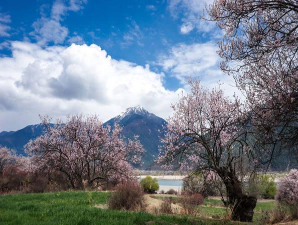 Tây Tạng là địa chỉ lý tưởng ngắm hoa, giúp du khách hòa mình với thiên nhiên. Tại đây, những cây hoa đào bừng nở trong khung cảnh trời xanh, mây trắng.
