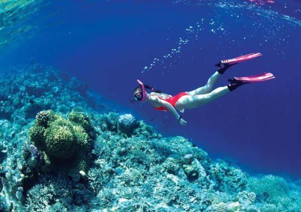 Trải nghiệm lặn ngắm san hô ở Côn Đảo. Ảnh: Con Dao Explorer
