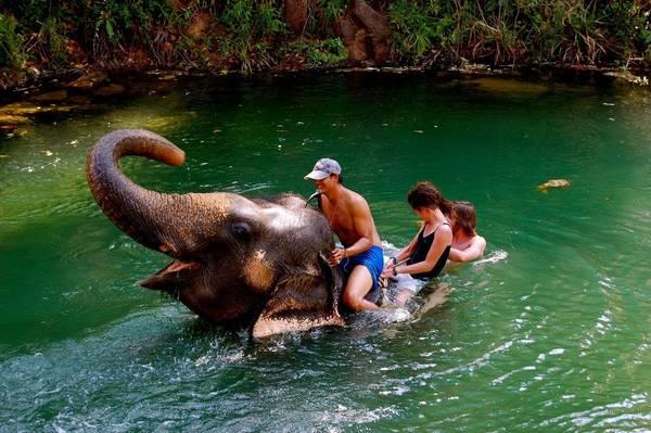 """1. Nói không với trò cưỡi voi: Phúc lợi dành cho động vật là một vấn đề nghiêm trọng ở nhiều quốc gia. Một chuyến ngắm cảnh trên lưng voi trong nửa tiếng ở Thái Lan có thể góp phần """"đổ thêm dầu vào lửa"""" đối với kiếp sống khổ sở của chú voi. Hãy tránh những cái bẫy du lịch giúp thúc đẩy hoạt động khai thác, bóc lột động vật. Ảnh: WordPress."""