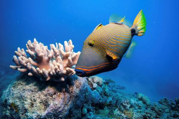 7. Đừng làm tổn hại san hô: Trong 30 năm qua, một nửa rạn san hô Great Barrier Reef (Australia) đã biến mất. Bạn có thể bị cám dỗ bởi suy nghĩ giữ một mẩu san hô làm kỷ niệm, hoặc chỉ để thỏa mãn lòng hiếu kỳ. Nhưng hành động của bạn sẽ gây tổn hại tới môi trường, góp phần hủy hoại kỳ quan của Trái đất. Ảnh: Radiotimes.