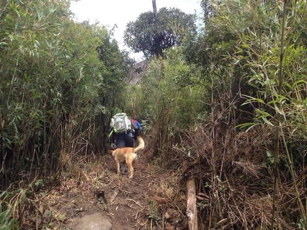 Chú chó vàng của dân bản từ đâu chạy tới, như đón chào và như dẫn đường cho chúng tôi lên đỉnh núi.