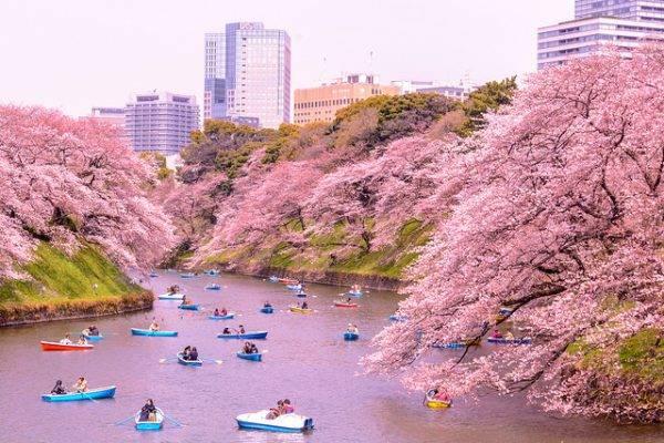 Cảnh đẹp lãng mạn của những người ngồi thuyền ngắm hoa, sắc hoa hồng dịu dàng bao phủ và tỏa bóng kín cả mặt nước.