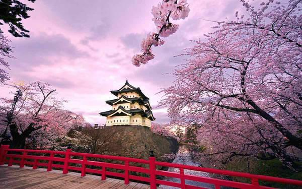 Dường như sắc hồng của hoa đã nhuộm hồng cả màu trời.