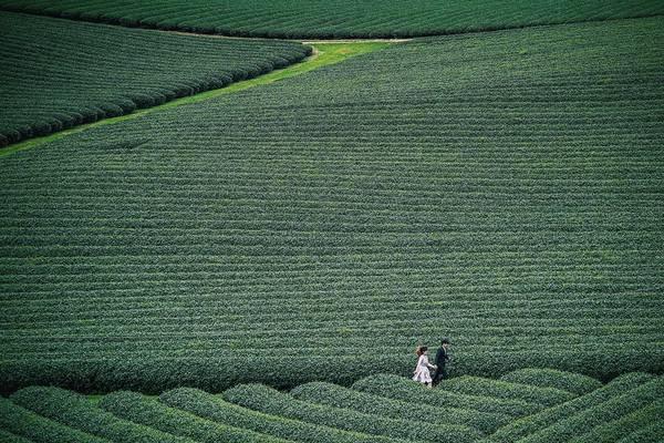 ... hay những đồi chè xanh ngút ngàn tại Mộc Châu - Sơn La. Đa số bức ảnh đều được cặp đôi tự chụp bằng chân máy. Đôi khi họ cũng nhận được sự giúp đỡ của bạn bè hay những người gặp trên hành trình.