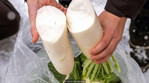 """Các loại thực phẩm đặt trong tuyết sẽ giòn hơn và có vị ngọt hơn đồ lưu trữ trong tủ lạnh """"xịn"""". Rau củ bảo quản bằng tuyết thường được người dân luộc, nấu súp, hầm hoặc ăn kèm với thịt lợn rừng."""