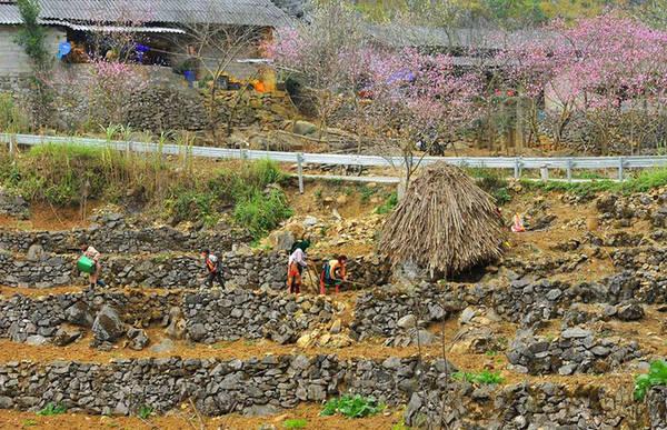 Bên quốc lộ 4C đoạn bước vào địa phận Đồng Văn, đồng bào người Mông đổ đất, lên luống để bước vào vụ mùa mới.