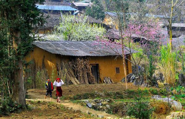 Tháng 3 là thời điểm cao nguyên đá Hà Giang không còn lạnh tê tái, thay vào đó là chút nắng vàng nhẹ, điều kiện thuận lợi để những cánh hoa đào, mận bung nụ, khoác lên mình tấm áo rực rỡ sắc màu.