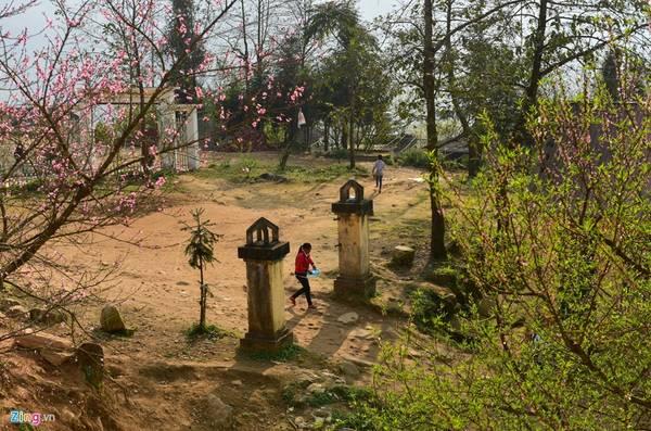 """Những cây đào nở rộ sau Tết Nguyên đán là """"nam châm"""" thu hút khách du lịch đến với vùng đất mù sương nơi biên cương Tổ quốc."""