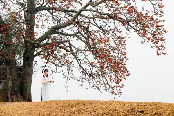 Tháng 3 là mùa nồm ẩm trên khắp đồng bằng Bắc bộ, mang theo cảm giác ảm đạm của những cơn mưa bụi đầy phiền toái, sương mù giăng khắp lối. Nhưng cũng chính thời điểm này, có một loài hoa dân dã đang rộ lên sắc đỏ ấm áp ở các làng quê, khiến người xa xứ cứ mãi ngẩn ngơ.