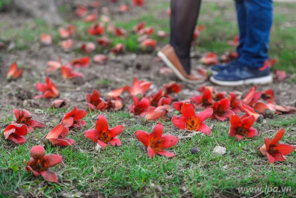 """Năm nay, hoa gạo nở vào tầm giữa tháng 3. Hiện tại, nhiều tay săn ảnh đã nhanh chân tìm đến những gốc gạo nổi tiếng nhất, ghi lại những hình ảnh lãng mạn, """"cứu vớt"""" cảm xúc cho những ngày mưa dầm ủ dột."""
