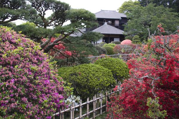 """Kairakuen được xây dựng vào khoảng năm 1841 bởi lãnh chúa Tokugawa Nariaki. Không giống như hai khu vườn khác của Nhật Bản Kenrokuen và Korakuen, Kairakuen phục vụ không chỉ cho giới quý tộc mà còn chào đón cả thường dân. Kairakuen có nghĩa là """"công viên để mọi người có thể cùng nhau thưởng thức"""". Ảnh: QuirkyJapanblog."""