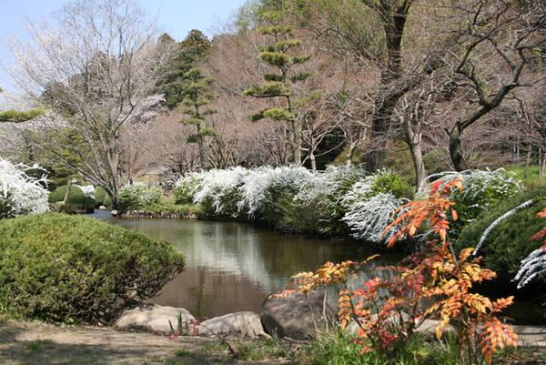 Kairakuen cách Tokyo 120 km về phía tây bắc. Bạn có thể đến Mito từ Tokyo bằng tàu cao tốc, mất khoảng một tiếng và chi phí 4.000 yen (khoảng 800.000 đồng). Ảnh: JPG.