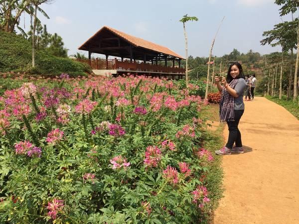 Ở bất kỳ khu vực nào của Ko Tam cũng đều tràn ngập sắc hoa đua nở.