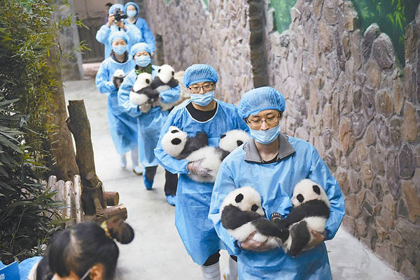 Các bé gấu được nuôi dưỡng và chăm sóc từ nhỏ nên rất thân thiết với các nhân viên trung tâm. Chúng thường xuyên có các hành động nũng nịu, đòi bế, giận dỗi hay ôm chặt người chăm sóc.