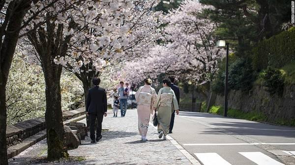 Thành phố Kanazawa, tỉnh Ishikawa: Kanazawa là thành phố lịch sử xinh đẹp bên bờ biển, giáp với dãy núi Alps Nhật Bản. Địa danh nổi tiếng nhất tại đây là khu vườn Kenrokuen, được xem là một trong ba khu vườn nổi tiếng nhất cả nước. Do ít khách du lịch biết đến, Kanazawa là nơi thích hợp để trải nghiệm mùa hoa anh đào.