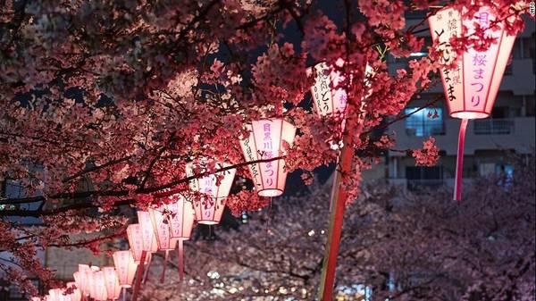Sông Meguro, Tokyo: Những cây anh đào bên dòng sông Meguro ở quận Nakameguro mang lại vẻ đẹp cho cảnh quan. Trong mùa hoa anh đào, các gian hàng được dựng lên tại đây, bán đồ ăn, bia, rượu vang.