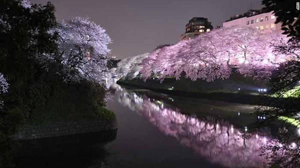 Công viên Ueno, Tokyo: Một trong những điểm ngắm hoa anh đào nổi tiếng nhất ở Tokyo là công viên Ueno với hàng nghìn cây anh đào, được trang trí đèn lồng. Vì vậy nơi đây thu hút lượng du khách rất lớn.