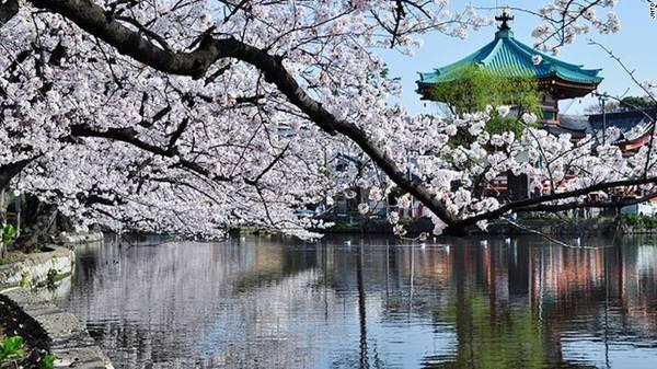 nhung-diem-ngam-hoa-anh-dao-Nếu không nhanh chân, bạn khó có thể tìm được chỗ ngồi dưới những gốc anh đào Yoshino màu hồng nhạt. Tuy nhiên, nhiều sự kiện đặc biệt và một phiên chợ cổ được tổ chức dành cho những người không tìm được chỗ ngắm hoa anh đào.dep-nhat-nhat-ban-ivivu-8