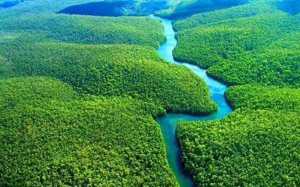 Amazon là rừng nhiệt đới lớn nhất thế giới, diện tích trải dài ở Braxin, Colombia và Peru. Khu rừng rậm này là nơi sinh sống của hơn 300 loài thú và 1.800 loài chim. Ảnh: Cabinflooresoterica.