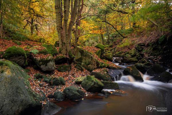 Vương quốc Anh là nhà của nhiều khu rừng tuyệt đẹp như cổ tích, nhưng nổi bật nhất trong số ấy là khu rừng thuộc quận Peak. Khi những loài cổ thụ thay màu áo mới theo các mùa, vẻ đẹp của khu rừng có thể khiến trái tim của bất cứ ai được chiêm ngưỡng cảm thấy xao xuyến. Ảnh: Philsproson Photography.